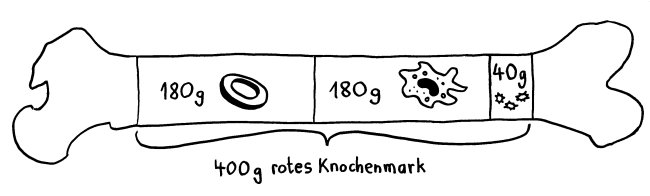 P1170225_Statistik_rotes_Knochenmark_650