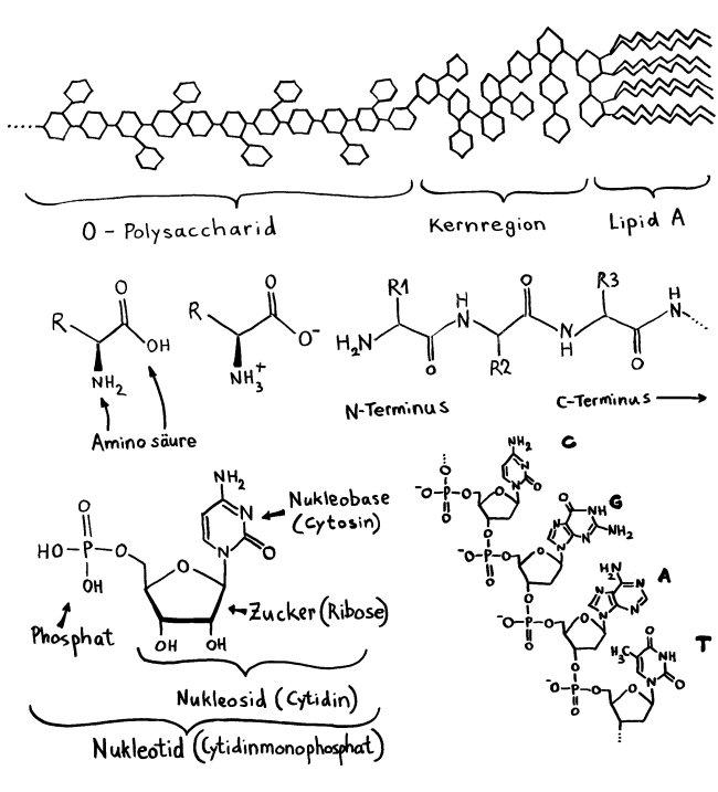 P1170268_LPS_Aminosäure_Peptid_Nukleotid_Nukleinsäure_650