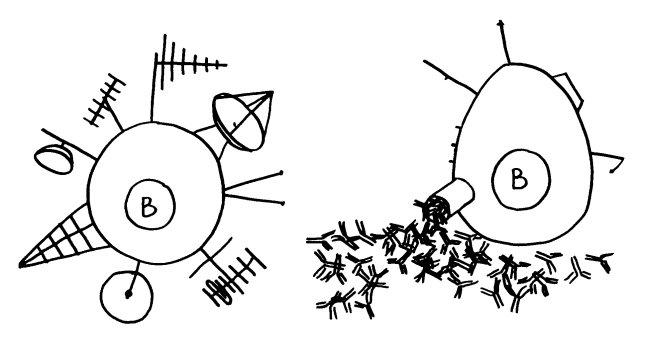 B-Zelle_Plasmazelle_Antennen_650