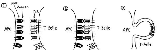 P1260656_Trogozytose_fertig_1-3_650