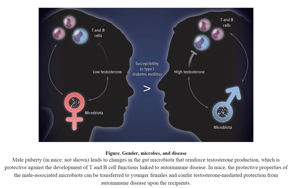 Aus: Flak et al., Welcome to the Microgenderome, doi:10.1126/science.1236226.