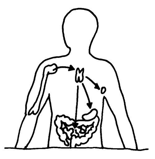 kortikale Thymus-Epithelzellen | Friendly Fire