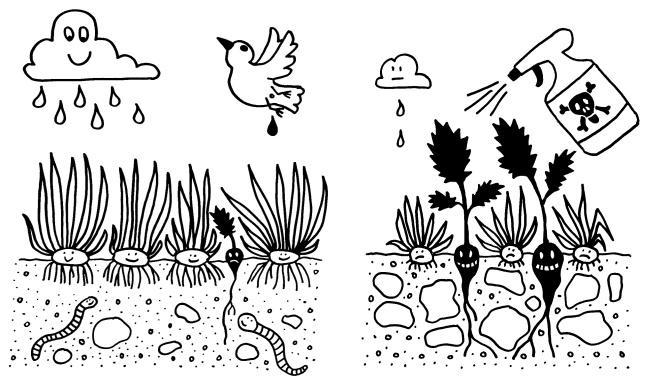 Im jungen, gesunden Organismus gedeihen normale Zellen (Gras) wegen der Nährstoffversorgung (Wolke), der Wachstumsfaktoren (Vogeldung) und der intakten Infrastruktur (Boden) so gut, dass sie Krebsvorstufen (Unkraut) in Schach halten. In alten oder geschwächten Organismen (rechts) herrscht ein anderer Selektionsdruck, sodass die Krebsvorstufen einen Überlebensvorteil haben.