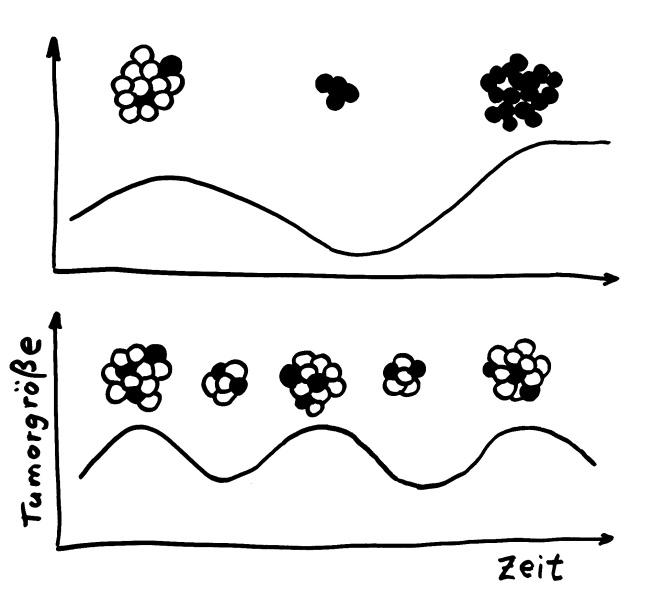 Oben: Herkömmliche Krebstherapien zielen auf ein vollständiges Absterben des Tumors ab und bringen oft resistente Zellen (schwarz) hervor, die zur Remission führen. - Unten: Zur Zeit werden neue Ansätze mit niedrigen Chemo-Dosen erprobt, die die weniger schädlichen Zellen im Tumor (weiß) nicht komplett abtöten, sodass diese die schädlicheren Zellen (schwarz) in Schach halten. Krebs soll so zu einer chronischen, beherrschbaren Erkrankung gemacht werden.