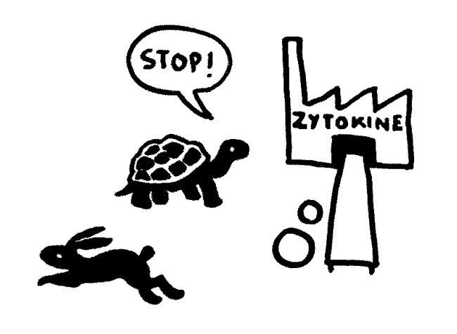Schildkröte_da_Zytokinproduktion_wieder_aus_4_650